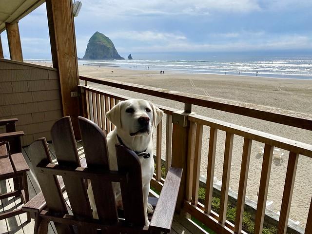 Pet-friendly oceanfront